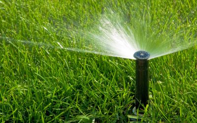 Four Important Summer Lawn Maintenance Tips