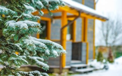Caring for Trees in Winter